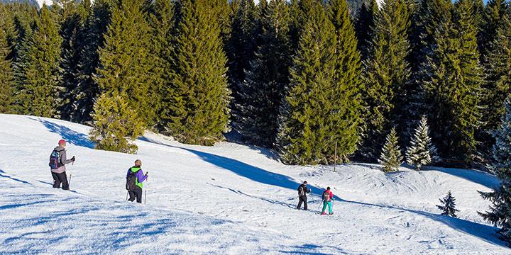 Schneeschuh_720x360